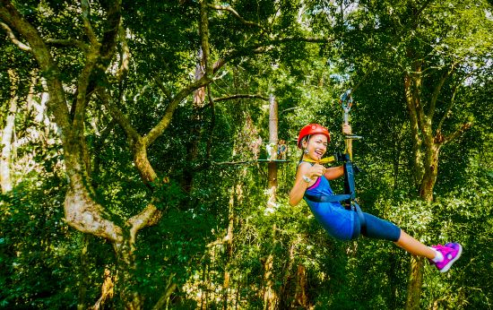 Learn about the forest as you glide through the treetops